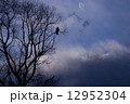 孤独なトンビ 12952304