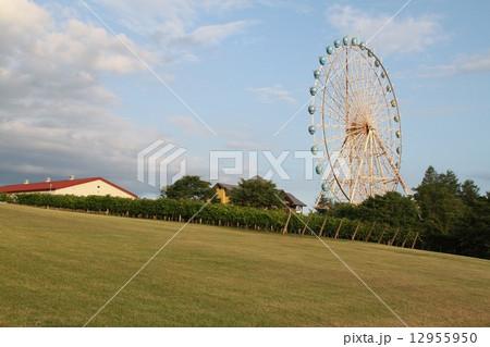 池田ワイン城にあった大観覧車。 12955950