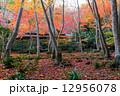 秋の祇王寺 12956078