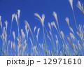 ススキと青空 12971610