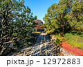 駒沢公園 駒沢オリンピック公園 紅葉の写真 12972883