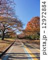 駒沢公園 駒沢オリンピック公園 紅葉の写真 12972884