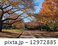 駒沢公園 駒沢オリンピック公園 紅葉の写真 12972885