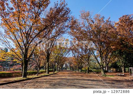 秋の駒沢公園 12972886