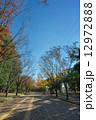 駒沢公園 駒沢オリンピック公園 紅葉の写真 12972888