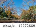 散歩道 駒沢オリンピック公園 駒沢公園の写真 12972889