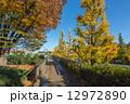 駒沢公園 駒沢オリンピック公園 紅葉の写真 12972890