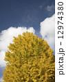 イチョウ 銀杏 秋の写真 12974380