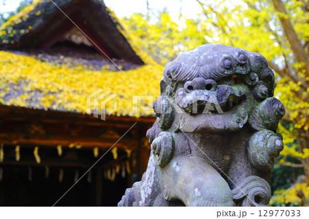 玉敷神社 ~晩秋2014~ 12977033