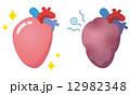 臓器のイラスト 心臓 12982348