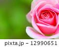 シェアリング・ア・ハピネス バラ 禅の写真 12990651