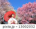 色鮮やかな桜と和服の女性 13002032