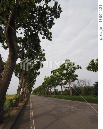 南国っぽい味のある街路樹 13004121
