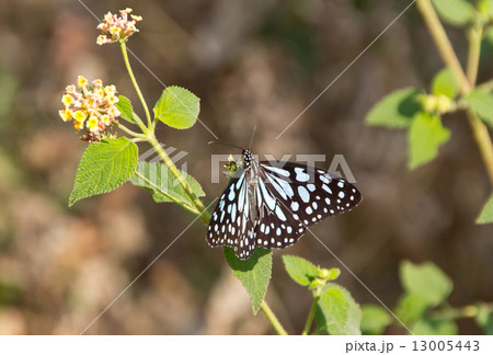 Big butterfly on a flower on a sunny day 13005443