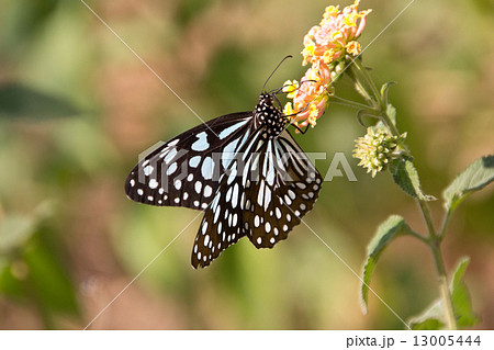 Big butterfly on a flower on a sunny day 13005444