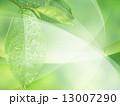 新緑のエコイメージ 13007290