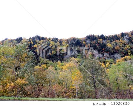 層雲峡の紅葉 13026330