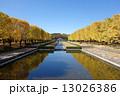 昭和記念公園 銀杏並木 国立昭和記念公園の写真 13026386