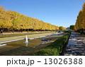 銀杏並木 昭和記念公園 国立昭和記念公園の写真 13026388