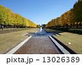 昭和記念公園 銀杏並木 国立昭和記念公園の写真 13026389