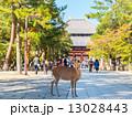 東大寺大仏殿と鹿 13028443