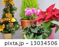 クリスマスイメージ 13034506