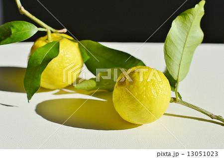 柚子の写真素材 [13051023] - PIXTA