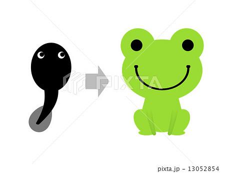 オタマジャクシからカエルへのイラスト素材 13052854 Pixta
