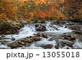 秋色の大坪川 13055018