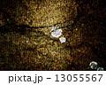 テクスチャー テクスチャ ボカシの写真 13055567