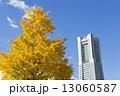 銀杏 青空 ランドマークタワーの写真 13060587