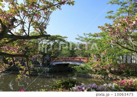 鶴岡八幡宮の新緑 13063475
