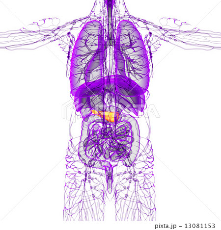 3d render medical illustration of the pancreas 13081153