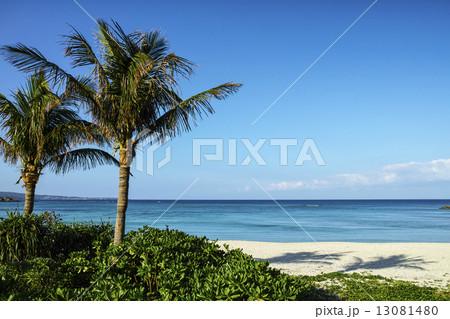 ブセナビーチ 13081480
