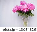 芍薬 生花 切り花の写真 13084826