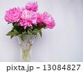 芍薬 生花 切り花の写真 13084827