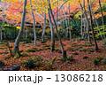 秋の祇王寺 13086218