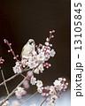 梅と雀 13105845