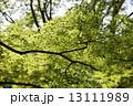 新緑 13111989