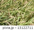稲1 13122711