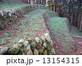 七尾城 100名城 石垣の写真 13154315