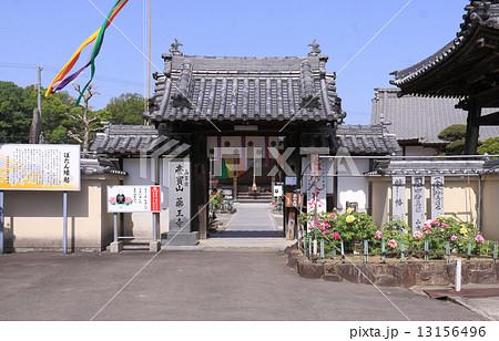 香川県三豊市山本町、牡丹の寺として知られる「薬王寺」 13156496