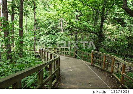 札幌市円山公園の散策道 13173033