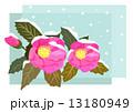 寒椿 13180949