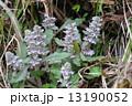 ジュウニヒトエ 13190052