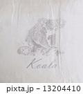こあら コアラ くまのイラスト 13204410