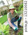 庭 ガーデニング 園芸の写真 13210082