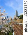 外濠公園 桜 満開の写真 13223370