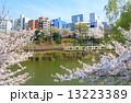 外濠公園 電車 桜の写真 13223389