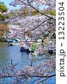 井の頭公園 井の頭恩賜公園 桜の写真 13223504